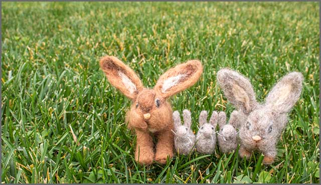 Family of rabbit fuzzy felt on the plain lawn